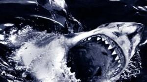 Haie attackieren am häufigsten an Floridas Küsten