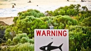 Mit Drohnen gegen Hai-Attacken