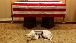 Auch Sully trauert um George H. W. Bush