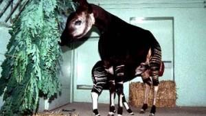 Zoodirektoren fordern flächendeckende Impfung