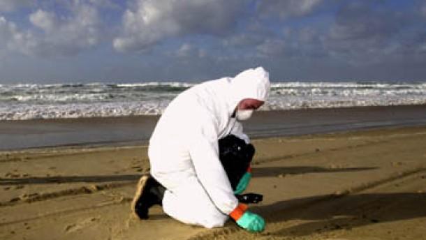 Austernbänke von Arcachon gesperrt