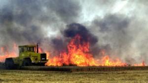 Weizenfeld in Magdeburg abgebrannt