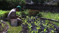 Mit Kleingärten gegen die Landwirtschaftskrise in Venezuela