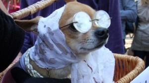 Halloween für Hunde