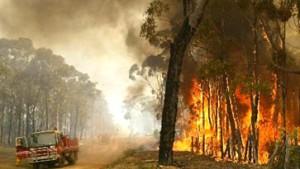 Buschfeuer weitgehend unter Kontrolle