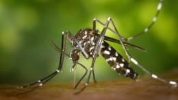 Tropische Mücken und Zecken rücken nach Norden vor