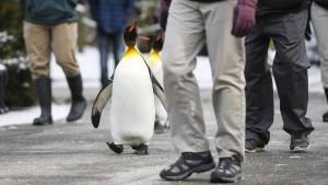 """""""Auch Pinguine rutschen aus"""""""