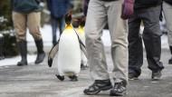 Auch Pinguine rutschen aus