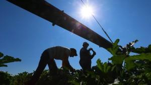 17-jähriger Erntearbeiter stirbt auf dem Feld