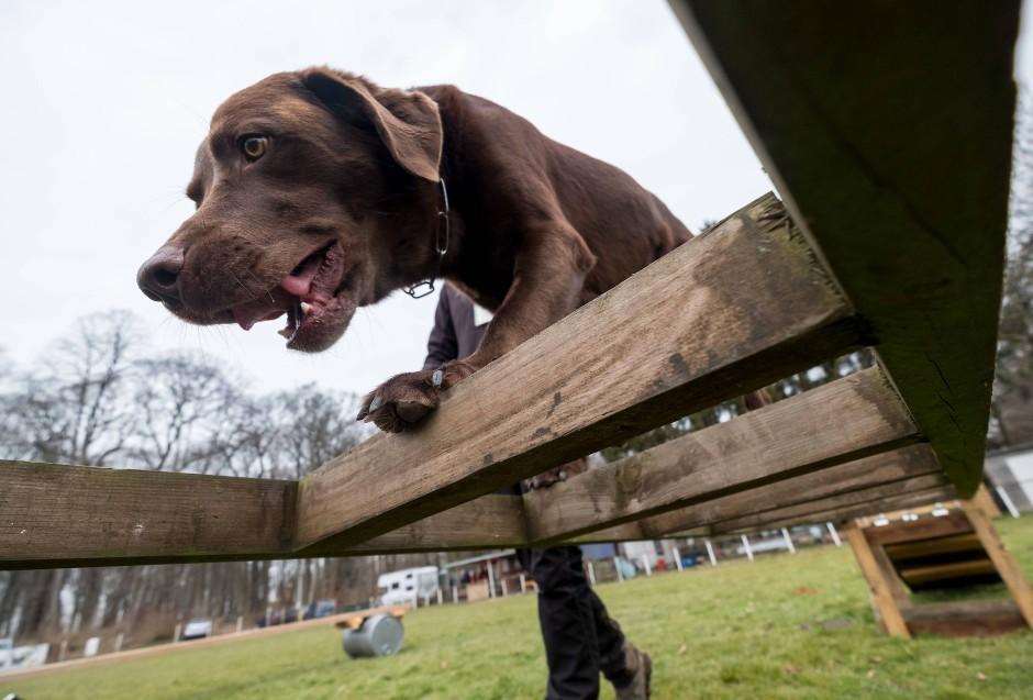 Der beste Freund des Menschen: Hunde sind ein sehr beliebtes Haustier in Deutschland.