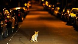 Polizei enttarnt Hauskatzenmörder