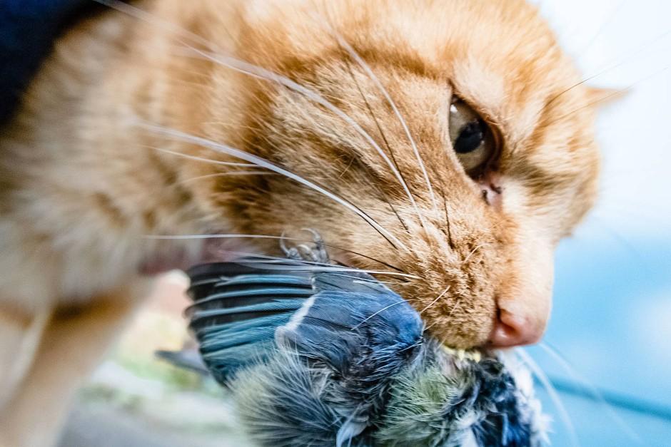 Bild von rasierte Katze