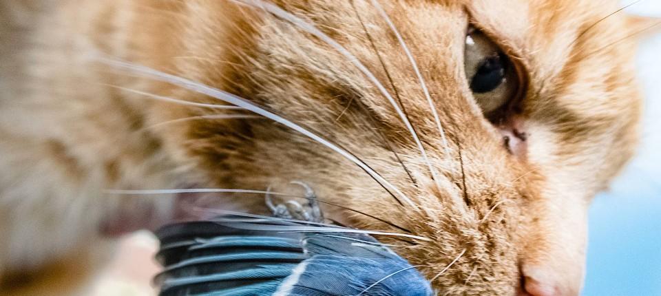 Katzen Zerstören Die Umwelt Besteuert Sie