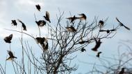 Wintervögel zeigt euch!