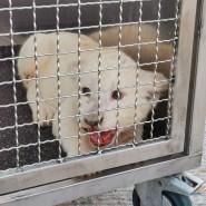 Ein kleiner Löwe sitzt in seiner Transportbox nachdem er nach einem Unfall auf der Autobahn A5 aus einem Fahrzeug befreit worden ist.