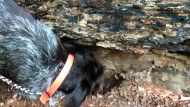 Mit dem Hund auf Trüffelsuche