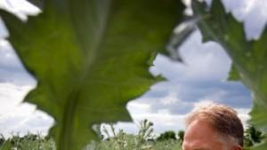 Lotse durch den Heilpflanzengarten
