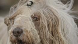 Aus Hunde- und Katzenhaaren können flauschige Pullover werden