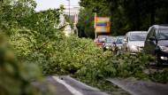 Baum auf der Straße, nichts geht mehr voran: Darf der Chef mich abmahnen, wenn ich deshalb zu spät zur Arbeit komme?