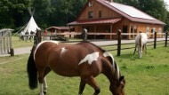 Coaching mit Tieren ist längst nicht mehr ungewöhnlich. Pferde sind am beliebtesten