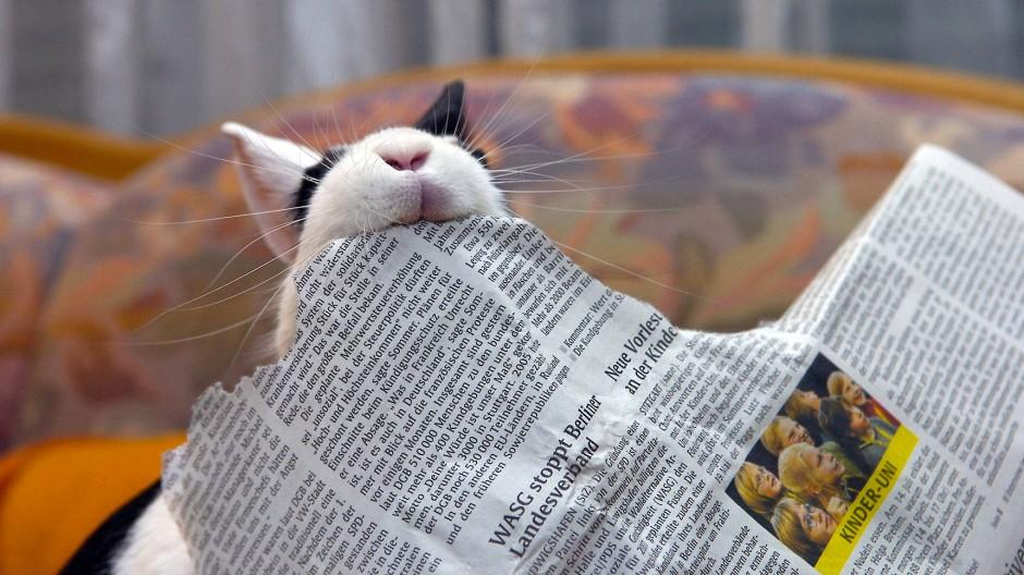 Ein Zwergkaninchen mit einer zerrpuften Tageszeitung