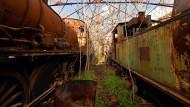 Wo rostige Züge mit der Landschaft verwachsen