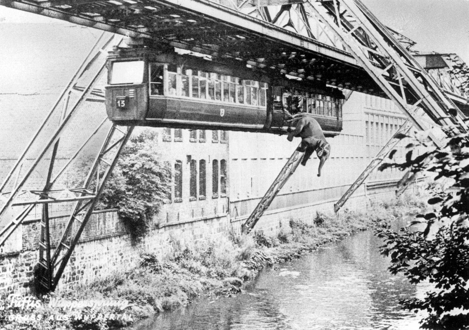 Wuppertal: 1950 sprang Elefant Tuffi aus der Schwebebahn