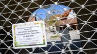 Voraussicht fällt schwer: Geschlossener Tierpark in Cleebronn, Baden-Württemberg