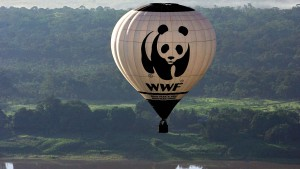 Der WWF kämpft um seinen Ruf