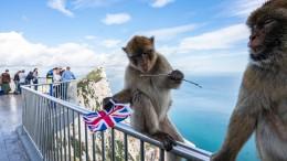 Gibraltar erwägt Beitritt zum Schengen-Raum