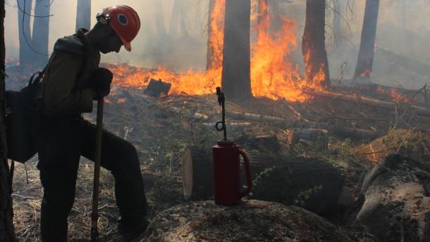 Lagerfeuer löste den Waldbrand aus