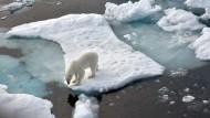 Immer weniger Platz: Nicht nur für Eisbären wie hier im Nordpolarmeer hat der Klimawandel drastische Folgen.