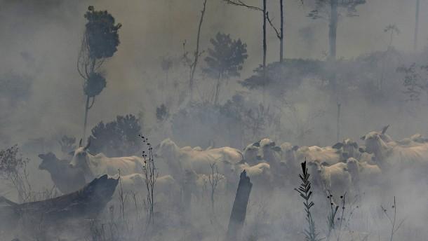 Bolsonaro verbietet Brandrodungen und verlängert Militäreinsatz