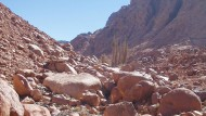 Das Wadi Arbai Naturschutzgebiet St.Katharina auf dem Sinai