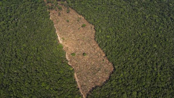 Bolsonaro schickt Militär zum Kampf gegen Abholzug