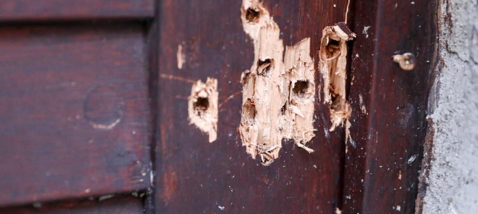 Einschusslöcher an der Tür der Synagoge in Halle zeugen von dem Versuch von Stephan B., sich gewaltsam Zugang zu verschaffen.