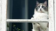 Hauskatzen droht Stubenarrest oder Kastration