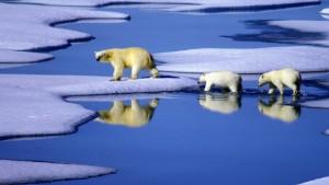 Fragliche Daten der Klimaforscher