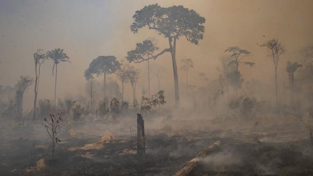 Allein im Mai wurde eine Fläche der Größe Hongkongs abgeholzt