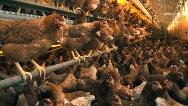Überhöhte Giftwerte auch bei Fleisch