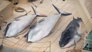 Walfangkommission will Japan von der Jagd abhalten