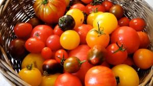 Der Traum von Tomaten für Chalki