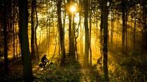 Herbststimmung: Es ist das Licht, das die Jahreszeiten so mächtig macht.