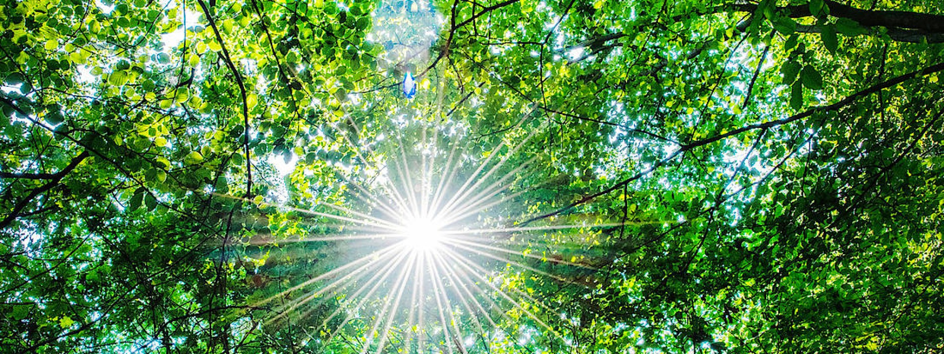 Es werde licht im deutschen Wald!