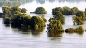 Flut spült Umweltpolitik in den Wahlkampf