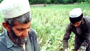 Der zweifelhafte Kampf der Taliban gegen Drogenanbau