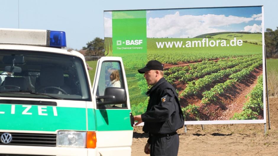 Nur unter Polizeischutz: Bei Bütow im Müritz-Kreis wird die gentechnisch veränderte Kartoffel «Amflora» gepflanzt