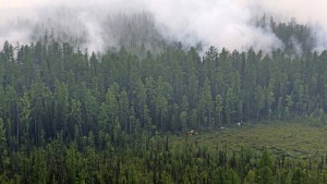 Trump bietet Putin Hilfe bei Waldbränden an