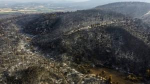 Wie ein Deutscher den griechischen Wald feuerfest machen will
