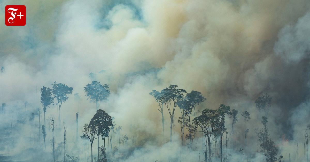 UN-Sicherheitsrat und und die Frage: Wem gehört der Regenwald?